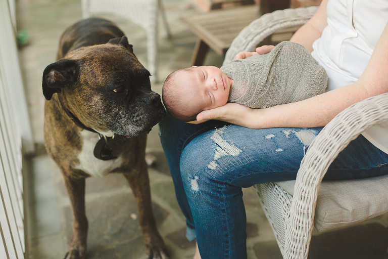 Newborn Lifestyle Session in Northern VA baby with dog